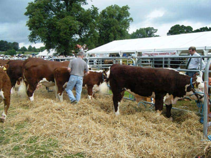 Agricultural and Cattle Shows (7)