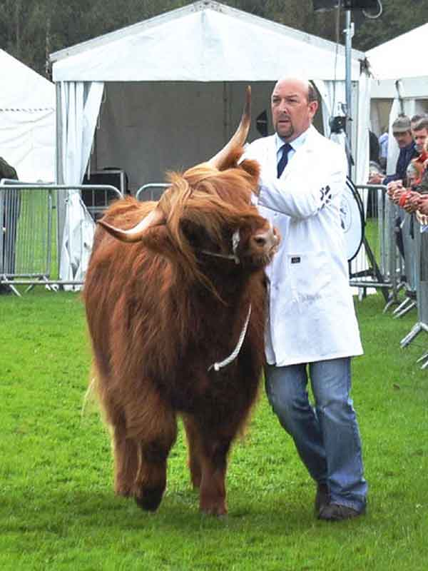 marquee hire Scotland for agricultural show